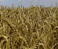types of cultivation of crops