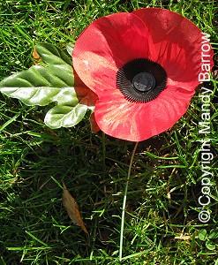 Poppy and remembrance day poppy mightylinksfo